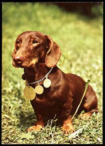 Dachshund /& Hot Dog Cart Modern Animal Postcard Frankie/'s Hot Dogs in Hawaii