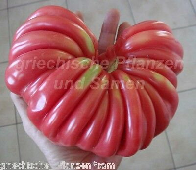 🔥 PITANGA Tomate 10 Samen SEHR SELTEN Tomaten ertragreich alte Sorte samenfest