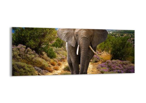 GLASBILD Wandbild Deko Tiere Afrika Elefanten Spaziergang 2708 DE