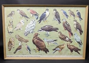 RSPB-Chart-No-6-Birds-Of-Prey-Print-amp-Framed-VRAH722003