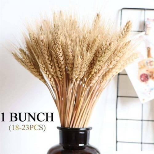 "20 Stems Dried Wheat-Rye Flowers Arrangement Natural Straw Colour Bouquet 20/"""