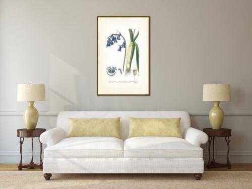Common Bluebell bluebells antique Victorian botanical engraving print art poster