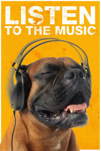 POSTER Listen to the Music Dog With Headphones