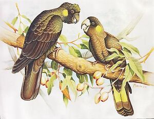 Hand-painting-Balinese-Parrots-Birds-319