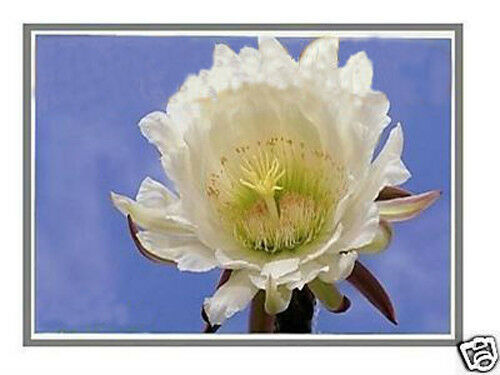 "721942-001 15.6/"" WXGA Laptop LCD LED Screen Display New HP Probook P//N"