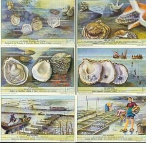 LIEBIG : S_1596 : Huîtres (les)