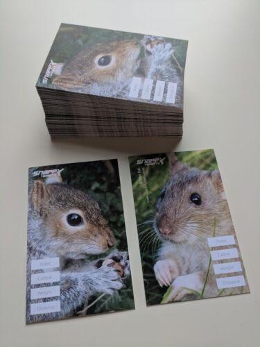 Air Gun Brown Rat and Grey Squirrel Air Rifle Life Size Vermin Targets