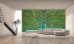 Peacock Wall Mural Photo Wallpaper GIANT DECOR Paper Poster Free