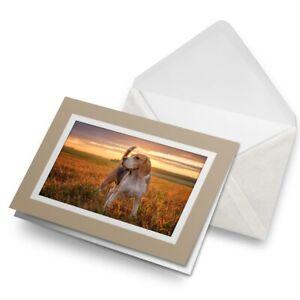 Greetings-Card-Biege-Gorgeous-Sunset-Beagle-Dog-3086