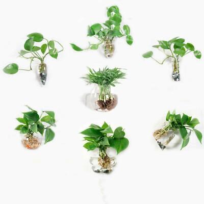 Irregular Wall Hanging Glass Planter Air Plant Terrarium 2018~ Flower Pots H6A2