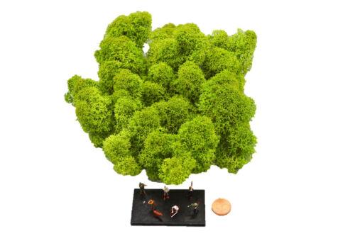Muwse Islandmoos Köpfe 3-7cm 25g TT Hellgrün handgereinigt Moos Büsche Bäume