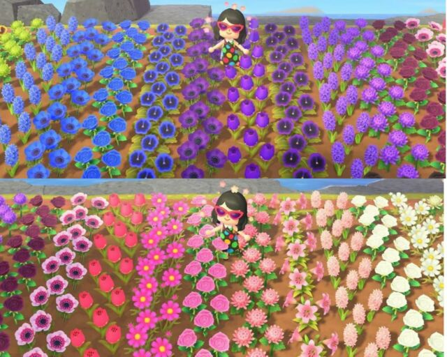 ALL HYBRID FLOWERS ACNH- Animal Crossing New Horizons blue roses, pink, purple