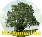 hugginsattic