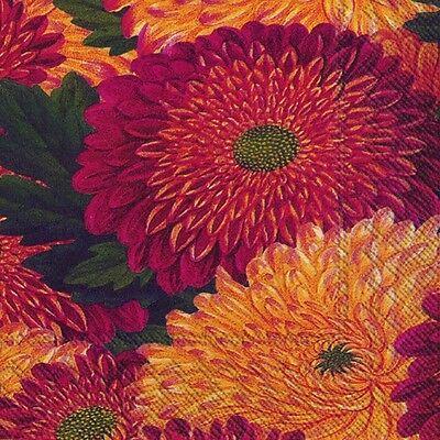 MUMS chrysanthemums  Caskata Studio paper lunch napkins new 20 in pack 33cm