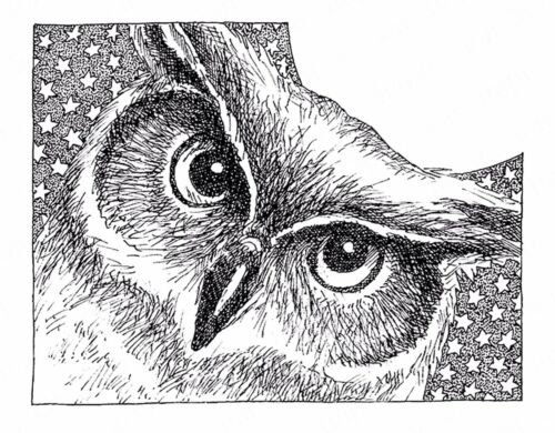 Star OWL Bird Wood Mounted Rubber Stamp IMPRESSION OBSESSION H2543 New