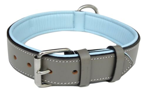 Gray and Blue Soft Touch Collars Padded Leather Dog Collar Size Large,