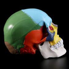 Colorful Human Skull Model Anatomy Medical Teaching Skeleton Head Supplies Tools