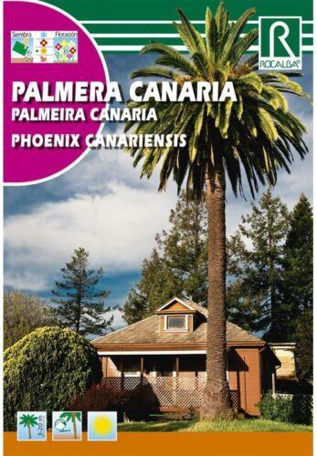 ARBOL PALMERA CANARIA