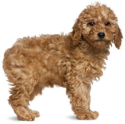 ROTTWEILER STICKER 12cm x 8cm Dog Free Aus Post Magnet Available
