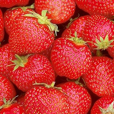 10 / 20 OR 35  x STRAWBERRY PLANTS BARE ROOTED CHOICE OF VARIETIES