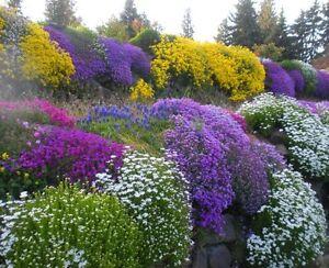 Détails sur Rocaille Jardin mixte Graines pack! une grande variation de  Hardy fleurs alpines!- afficher le titre d\'origine