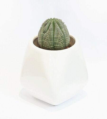 High Gloss White Crystal Shape Ceramic Succulent Pot  Set of 3 Pots