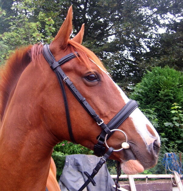 HERITAGE English Comfort Padded Poll Crank Cavesson Dressage Show Snaffle Bridle