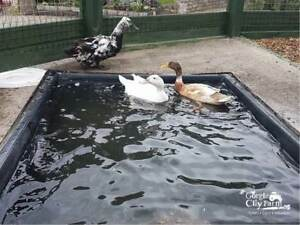 839 Litre Duck Geese Swans All Types Of Wildlife Pond 25 Year Guaranteed