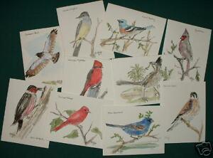 SE-ARIZONA-BIRDS-NOTE-CARDS-PEN-amp-INK-WATERCOLOR-ART