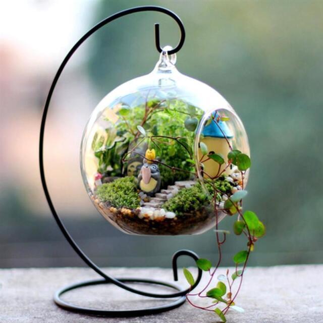 4 Pack Med Globe Glass Terrariums Centerpiece Wedding Diy Fairy