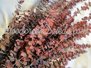 DRIED FLOWER PRESERVED RED BURGUNDY SPIRAL EUCALYPTUS FRAGRANT FLOWER STEM
