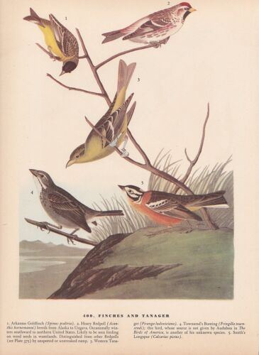 "1942 Vintage AUDUBON BIRDS #400 /""FINCHES /& TANAGERS/"" Color Art Plate Lithograph"