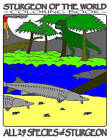 Sturgeon of the World: Coloring Book by G R Fich (Paperback / softback, 2009)