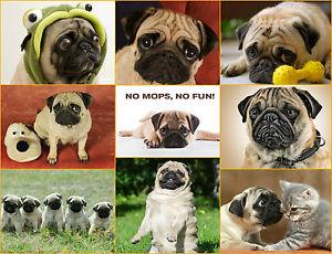 034-NO-MOPS-NO-FUN-034-10-Postkarten-Postkarten-Set-Moepse-ideal-fuer-Mops-Freunde