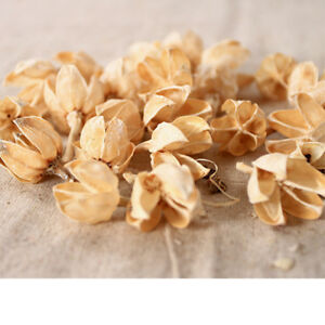 30x-Natural-Pine-Cones-Dried-Flowers-Parties-Decoration-Crafting-Supplies