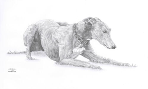 GREYHOUND 7 dog Ltd Edit art drawing prints 2 sizes A4//A3 Note greetings Card