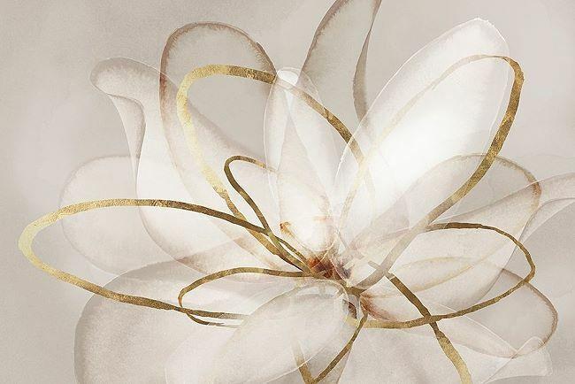 Eva Watts  Trasparente Beauty (III) Barella-Immagine Schermo Fiore
