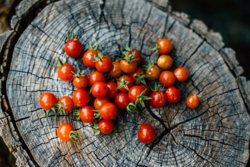 Sol. P K44 Rootstock Tomato Seeds 25 Seeds Tomato Porte-Greffe Small Sparrow