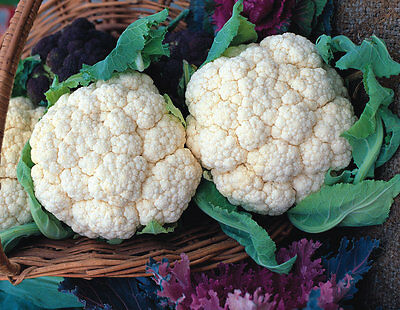 ORGANIC Cauliflower Snowball -  50 seeds - Vegetable