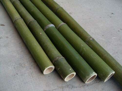 Bamboo Poles-Bamboo-diameter 3 CM-H 250 cm