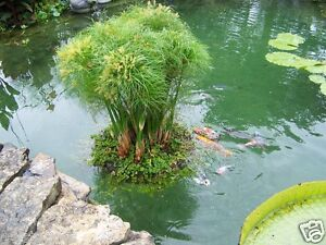 24 floating island pond planter plant koi water garden for Koi pool water gardens cleveleys