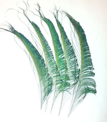 Espada De Pavo Real Plumas de 12 pulgadas de color verde iridiscente Reino Unido Stock