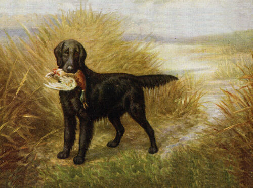 FLAT COATED RETRIEVER CHARMING DOG GREETINGS NOTE CARD BEAUTIFUL DOG /& DUCK