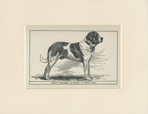 SAINT BERNARD SMOOTH COATED ANTIQUE 1900 ENGRAVING NAMED DOG PRINT READY MOUNTED