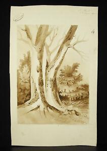 Sign-Louis-Plivard-un-Albero-Wash-Originale-Scuola-Politecnico-1870-Disegno-Draw