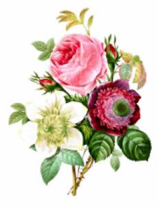 Vintage Image Victorian Shabby Orange Roses Furniture Transfers Decals FL496