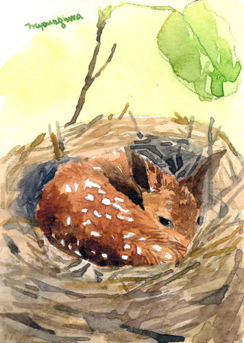 ACEO Limited Edition-Sleeping baby deer art print of an original watercolor