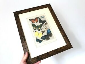 Antique-Typical-Butterflies-Print-Professionally-Framed