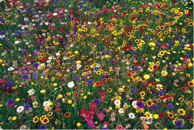 .wildflower mix,100% seed, 1 POUND, LB. SEEDS! GroCo