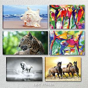 Animali quadro moderno stampe su tela quadri arredamento for Stampe arredo casa